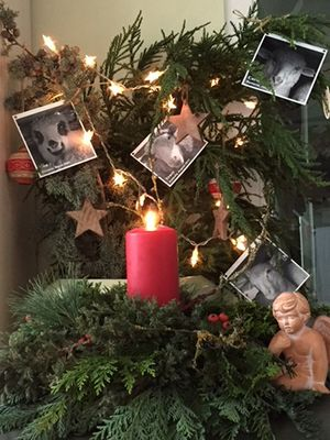 December 2017: Christmas Tree of Love in Germany