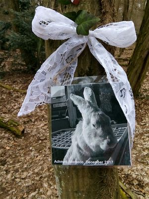 March 2018: Animal Memorial in Germany