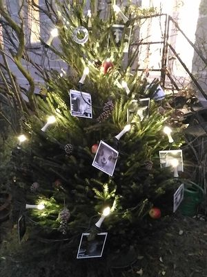 December 2017: Christmas Tree of Love in Berlin, Germany
