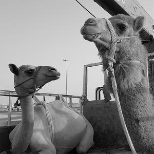 Yara & Abbas