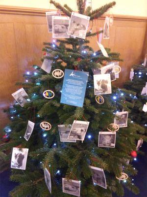 December 2019: Christmas Tree of Love, Edinburgh