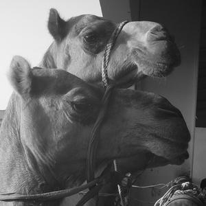 Hamida & Nidya