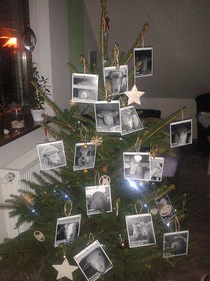 December 2017: Christmas Tree of Love in Frankfurt, Germany