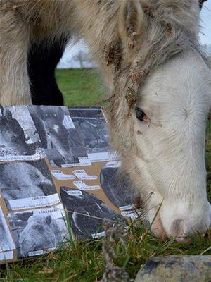 December 2017: Animal Memorial in Ireland