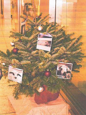 December 2017: Christmas Tree of Love in Ulster, Switzerland